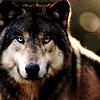 Numéro 15 - Juillet 2016 Hollowart_wolf049