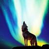 Numéro 15 - Juillet 2016 Wolves_019