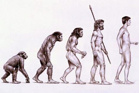 Qui est la première femme née sur Terre ? - Page 3 Evolution-de-l-homme1