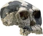 Le paléolitique Habilis