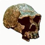 Les annunakis: ceux qui descendaient du ciel sur la Terre, qui sont-ils? - Page 5 Homo-erectus