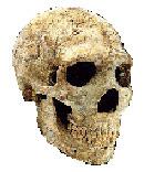 Les annunakis: ceux qui descendaient du ciel sur la Terre, qui sont-ils? - Page 5 Neanderthalis