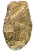 Le paléolitique Hachereau