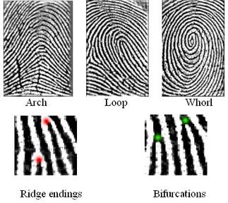 X - WALT DISNEY - One of his fingerprints shows an unusual characteristic! - Page 3 Fingerprint_types