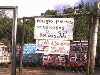 Cocodrilo venenoso y otras criaturas marinas Perros_bravos_y_venenosos