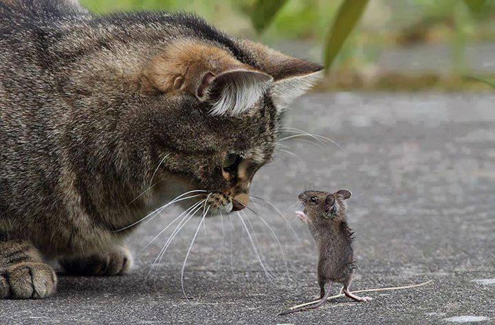 Humore montazhi dhe foto tjera humoristike - Faqe 2 Mace
