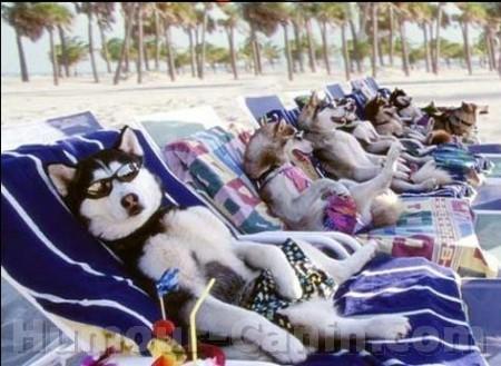 "Avatars ""Vacances"" Big_3889-chien-vacances"