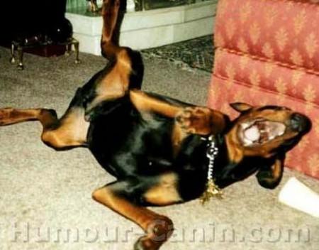 chargeurs pour M16 Big_5160-chien-mort-de-rire