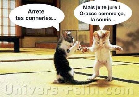 Images comiques du web (TF ou pas) - Page 4 Big_4754_chat_peche_humour