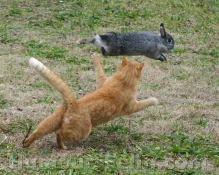 Les animaux et autres bestioles - Page 4 Big_5693-chat-lapin-chasse