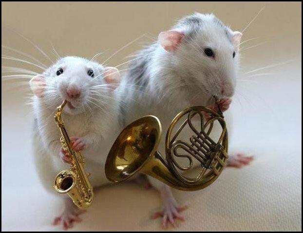 [MMs] Superbox vs [Dr Cana] Jazz - 299M Jazz_band_souris