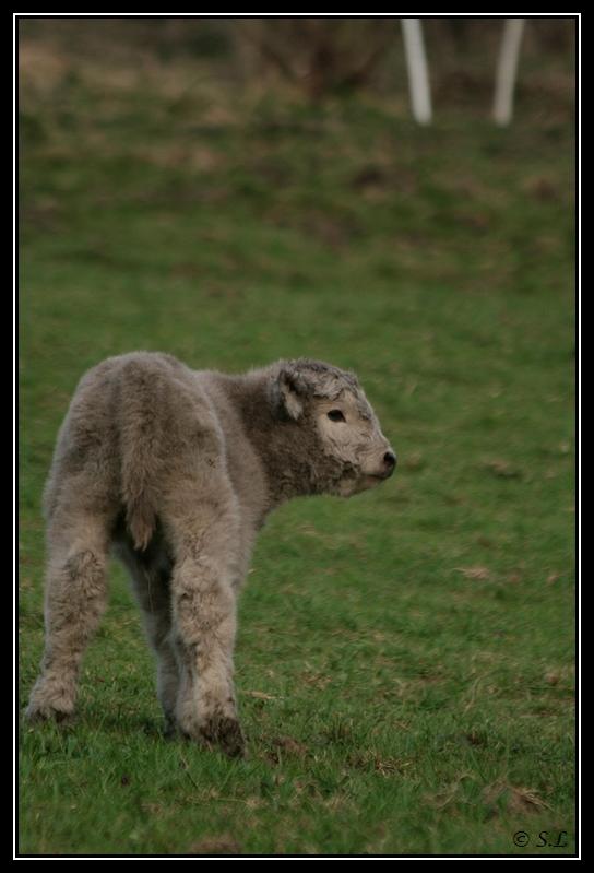 Highland 2012 sur la ferme du Hunt-Cam Highland-harn1G