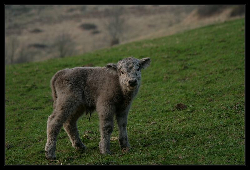 Highland 2012 sur la ferme du Hunt-Cam Highland-harn2G