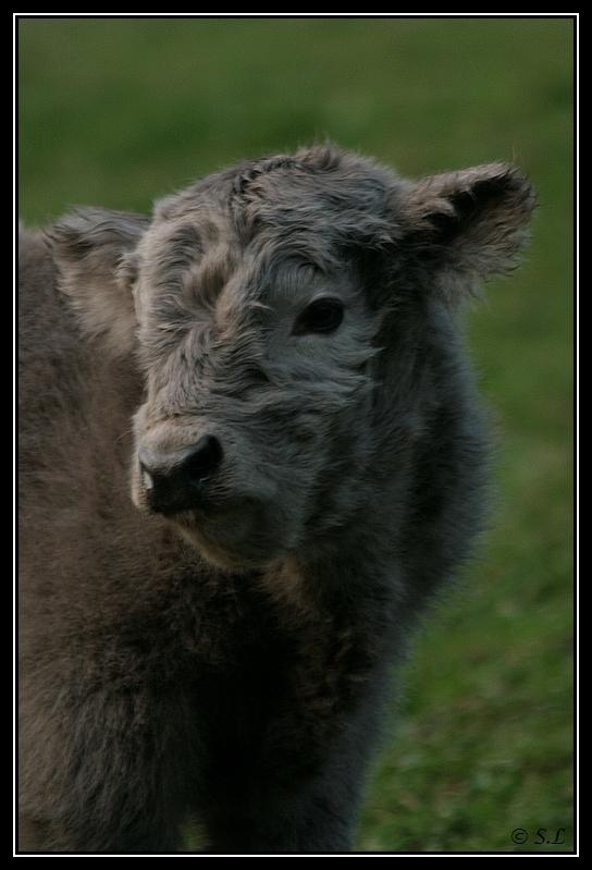 Highland 2012 sur la ferme du Hunt-Cam Highland-harn3G
