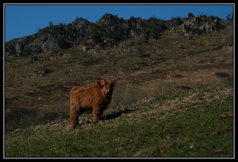 Highland 2012 sur la ferme du Hunt-Cam Highland-harriet10G