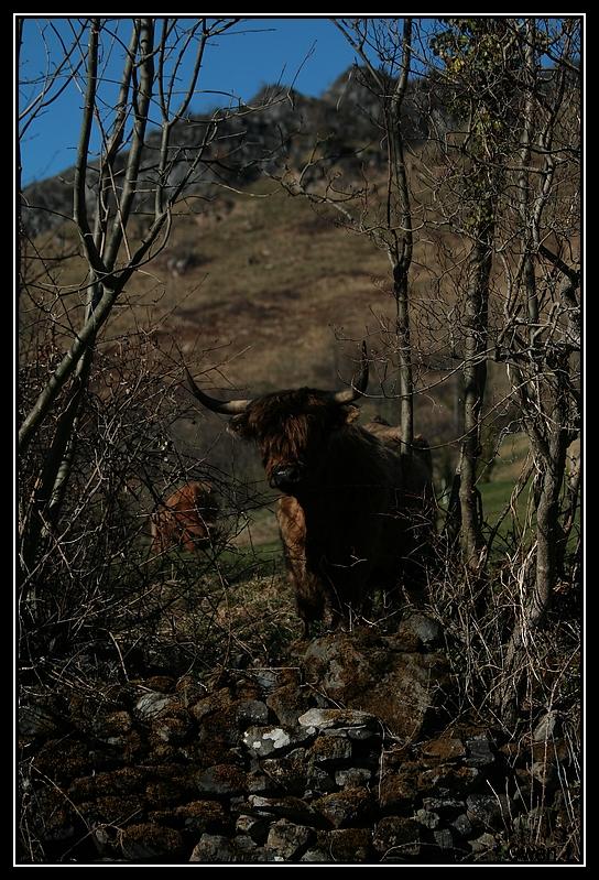 Highland 2012 sur la ferme du Hunt-Cam Highland-helora11G