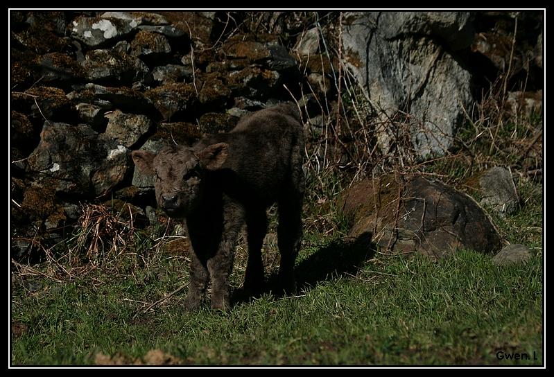 Highland 2012 sur la ferme du Hunt-Cam Highland-helora13G