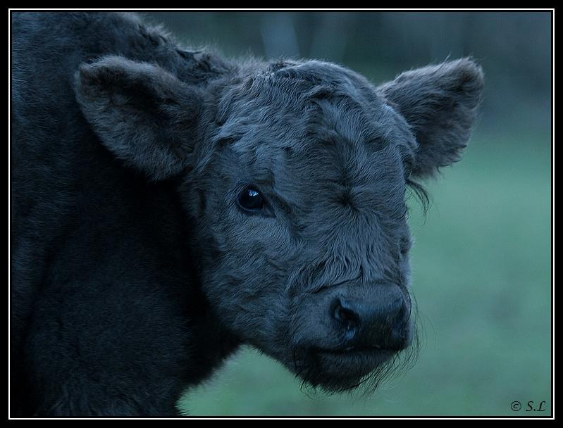 Highland 2012 sur la ferme du Hunt-Cam Highland-helora6G