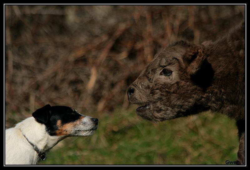 Highland 2012 sur la ferme du Hunt-Cam Highland-helora9G