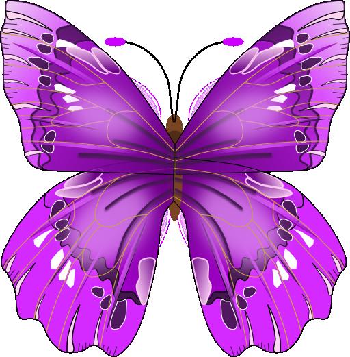 صور فراشة png - صور فراشات مفرغة بصيغة png Clipart-butterfly-512x512-be40