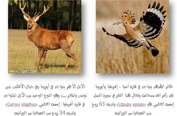 ســـبـــحــانك ربــي مــا اعــظــمــك Chromosomes_of_hoopoe_and_deer-139