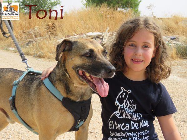 TONI - MARRON (SOLE) TONI_AAAB