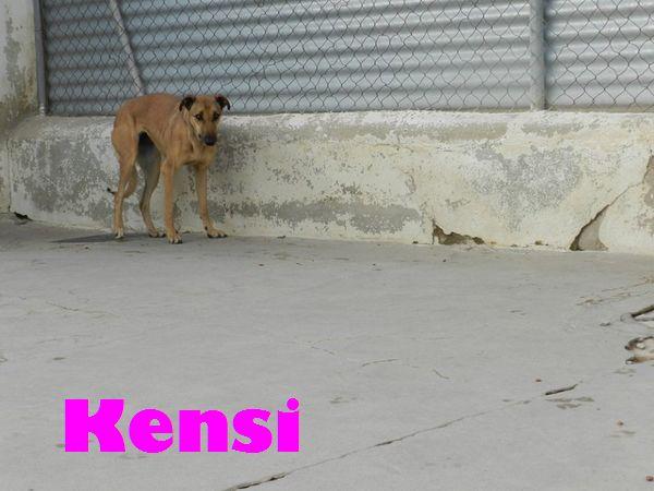 KENSI - MARRON (SOLE) Kensi_a