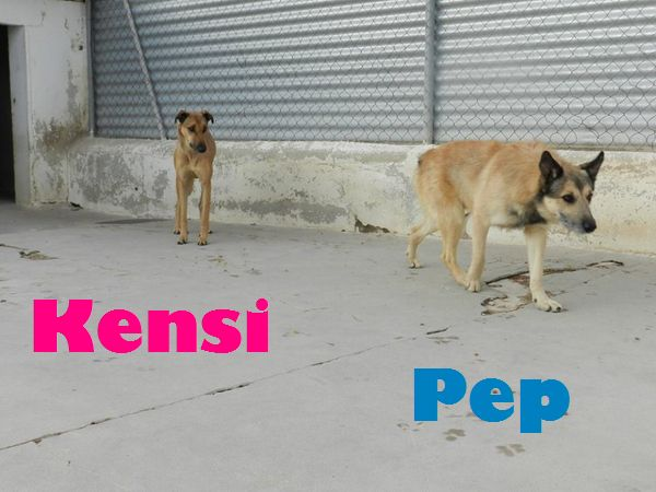 KENSI - MARRON (SOLE) Kensi_b