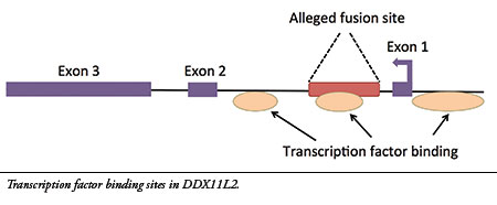 Chromosome 2, evidence for common ancestry ?  Research_debunks_chrom_fusion_pic