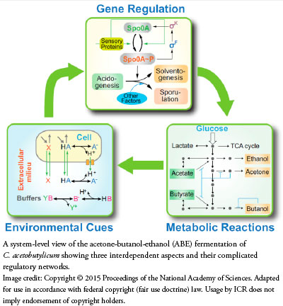 How Cellular Enzymatic and Metabolic networks  point to design Bacteria_circuitboard_pic