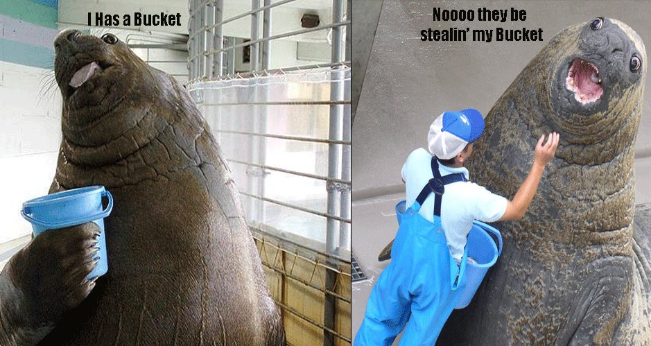 The Funny Pictures Thread! Walrus_bucket