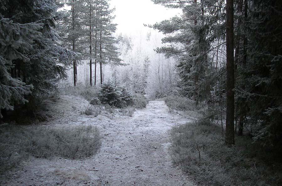 Роскошные пейзажи Норвегии - Страница 3 Forest1