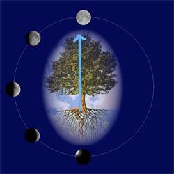 La Luna e i ritmi della Vita Lune02a250