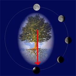 La Luna e i ritmi della Vita Lune02b250