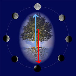La Luna e i ritmi della Vita Lune03_250