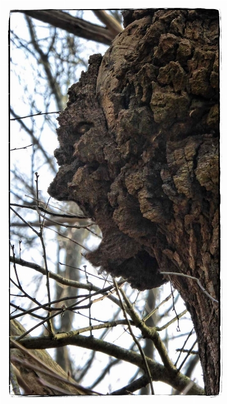 L' esprit de la forêt - Page 2 15192975121998258816