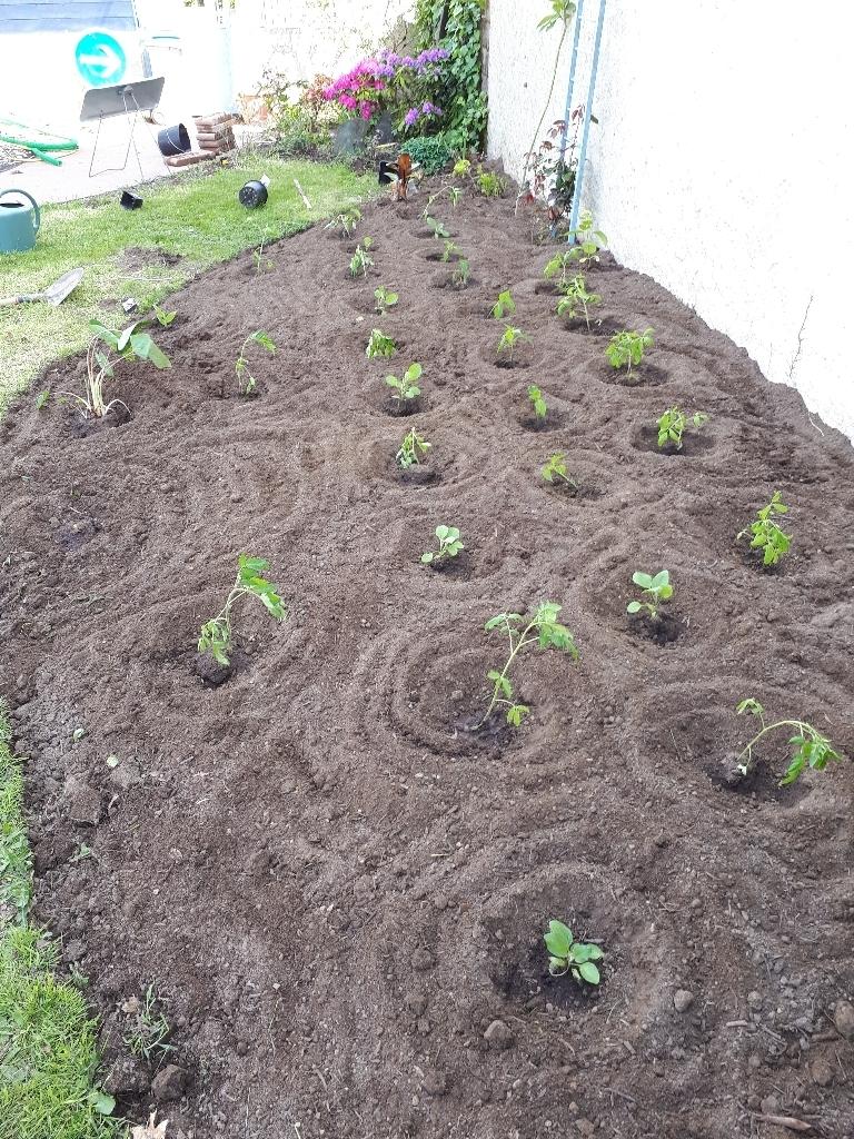 les jardins sont beaux en mai ! - Page 5 15274280411596372944