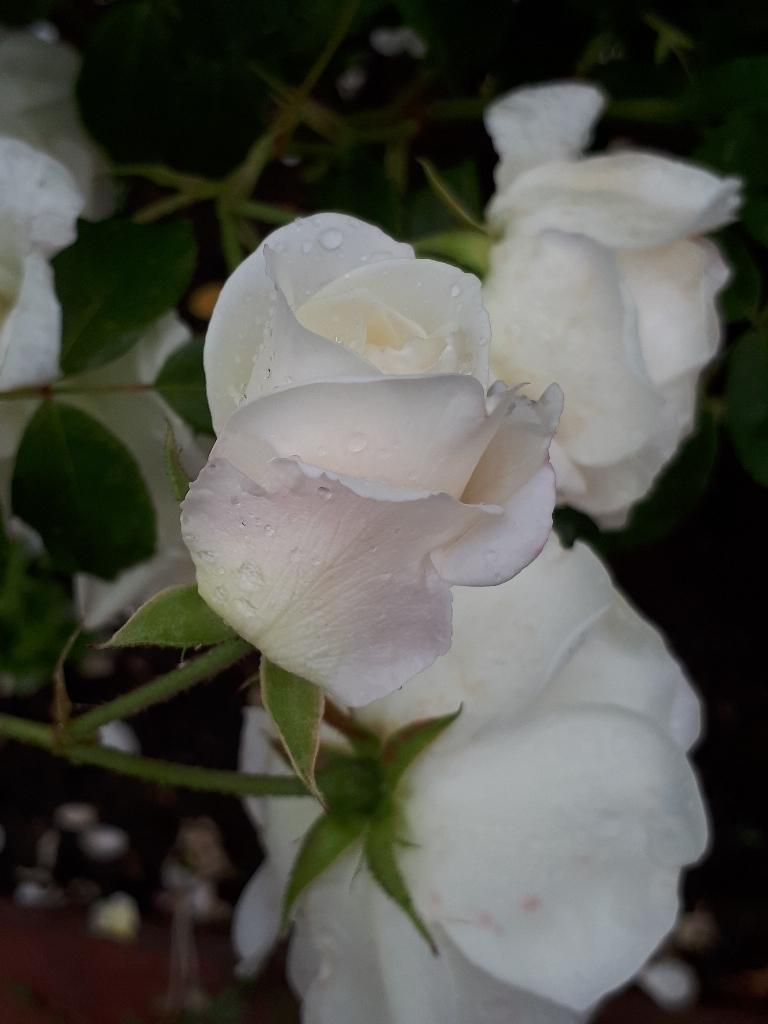 les jardins sont beaux en mai ! - Page 5 1527428715107344461