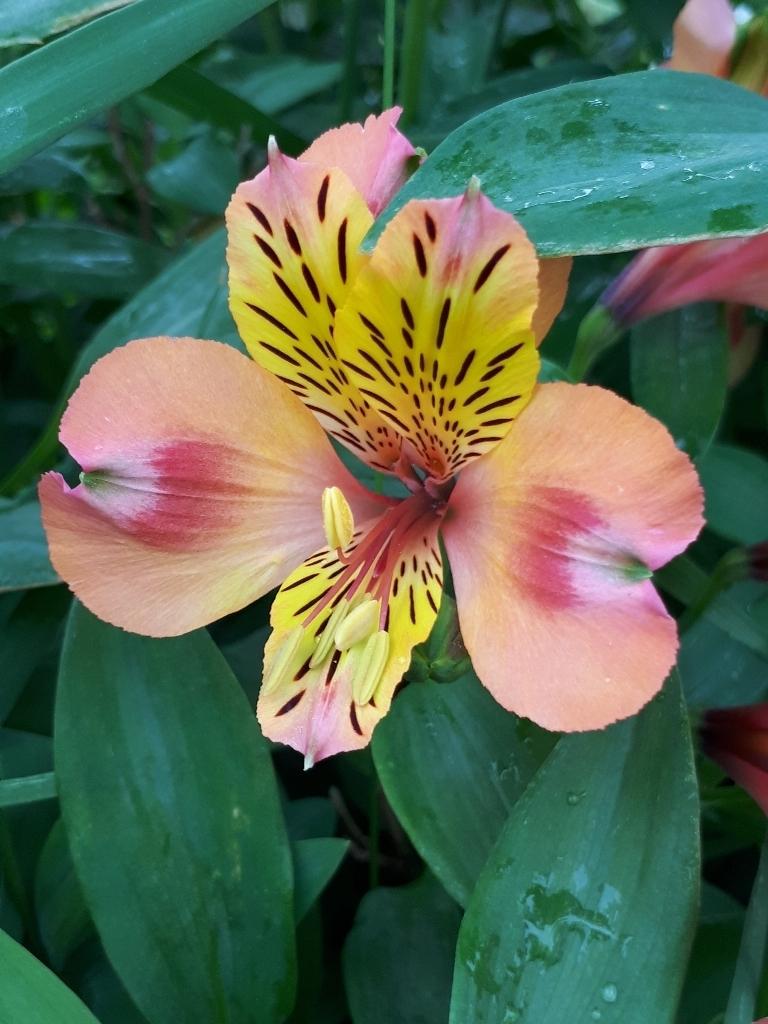 les jardins sont beaux en mai ! - Page 5 15274296671493409022
