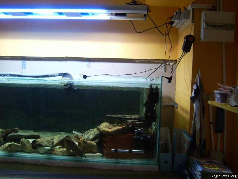L'aquarium a Jipaige Ic0004