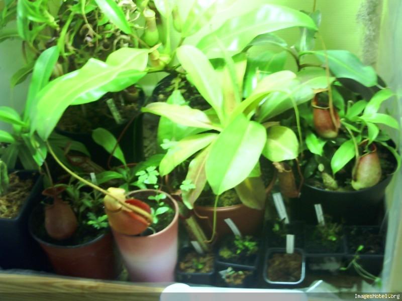mon new terra polystyrène ( en cours) Jungle