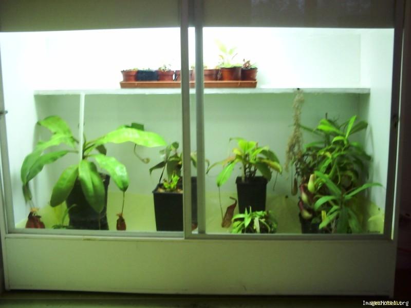 Postez ici vos terrariums serres et tourbieres - Page 2 Newserre3