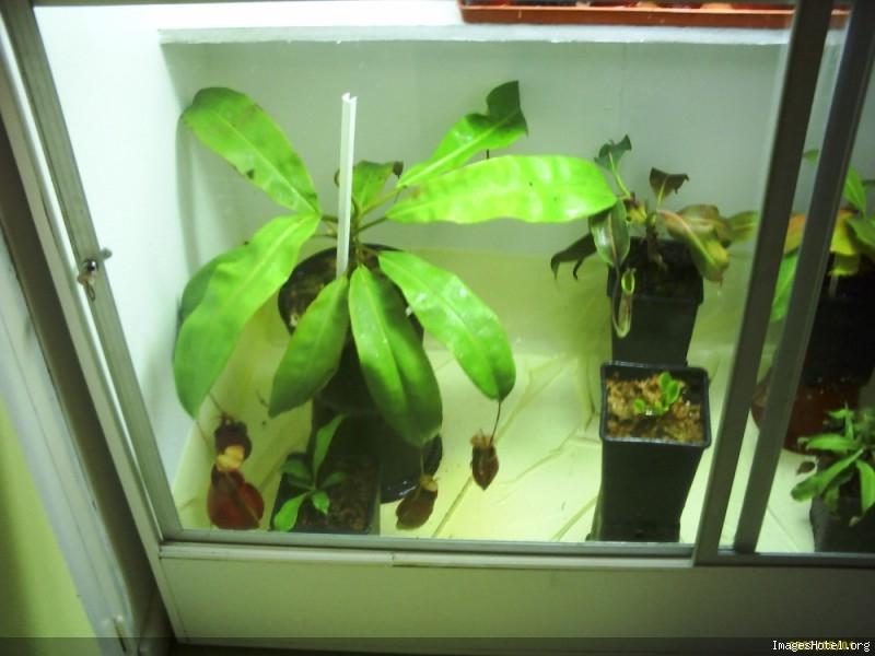 Postez ici vos terrariums serres et tourbieres - Page 2 Newserre4