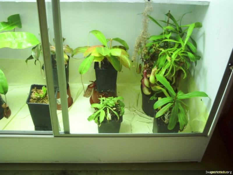 Postez ici vos terrariums serres et tourbieres - Page 2 Newserre5