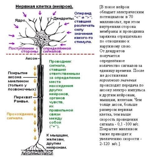 Что такое сознание и личность человека? Bakteriya4