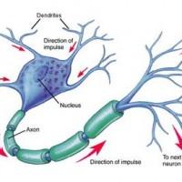 5-Biologia