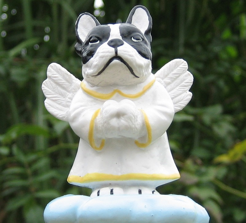 A doggie-angel from Holland :-D Bully4