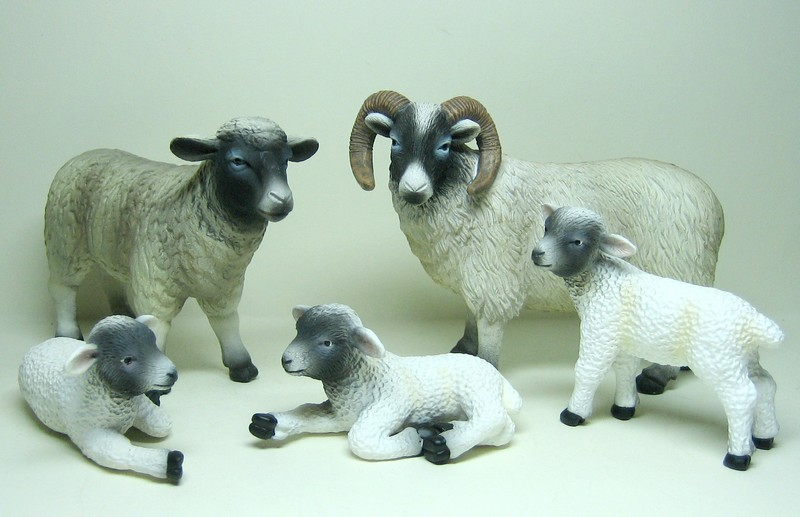See the models in a new light :-D Mojoblackheadsheep