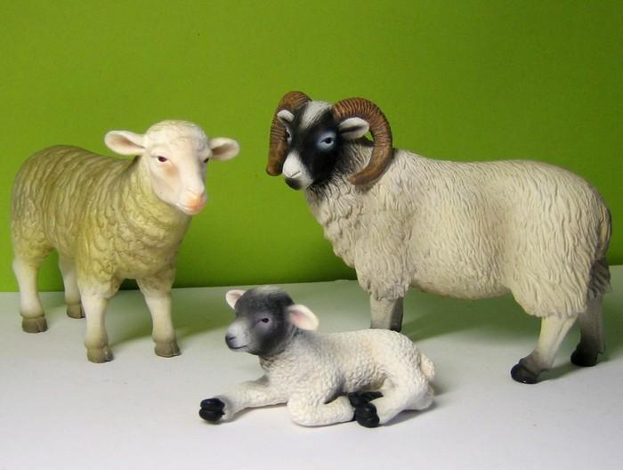 Sheep and horses :-))) Mojosheep212