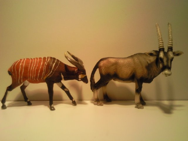I am a member of the Ana Bongo club too now! Anas_Bongo_met_Schleich_Oryx_1